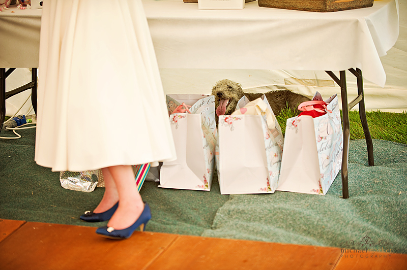 Wedding-day-dog