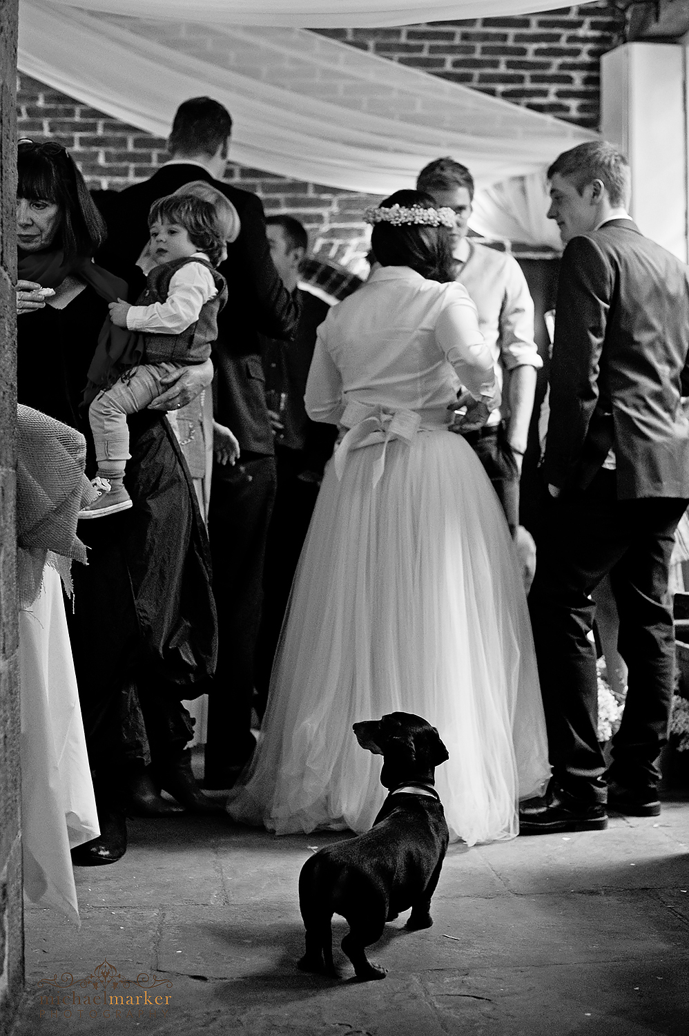 daschund at wedding reception