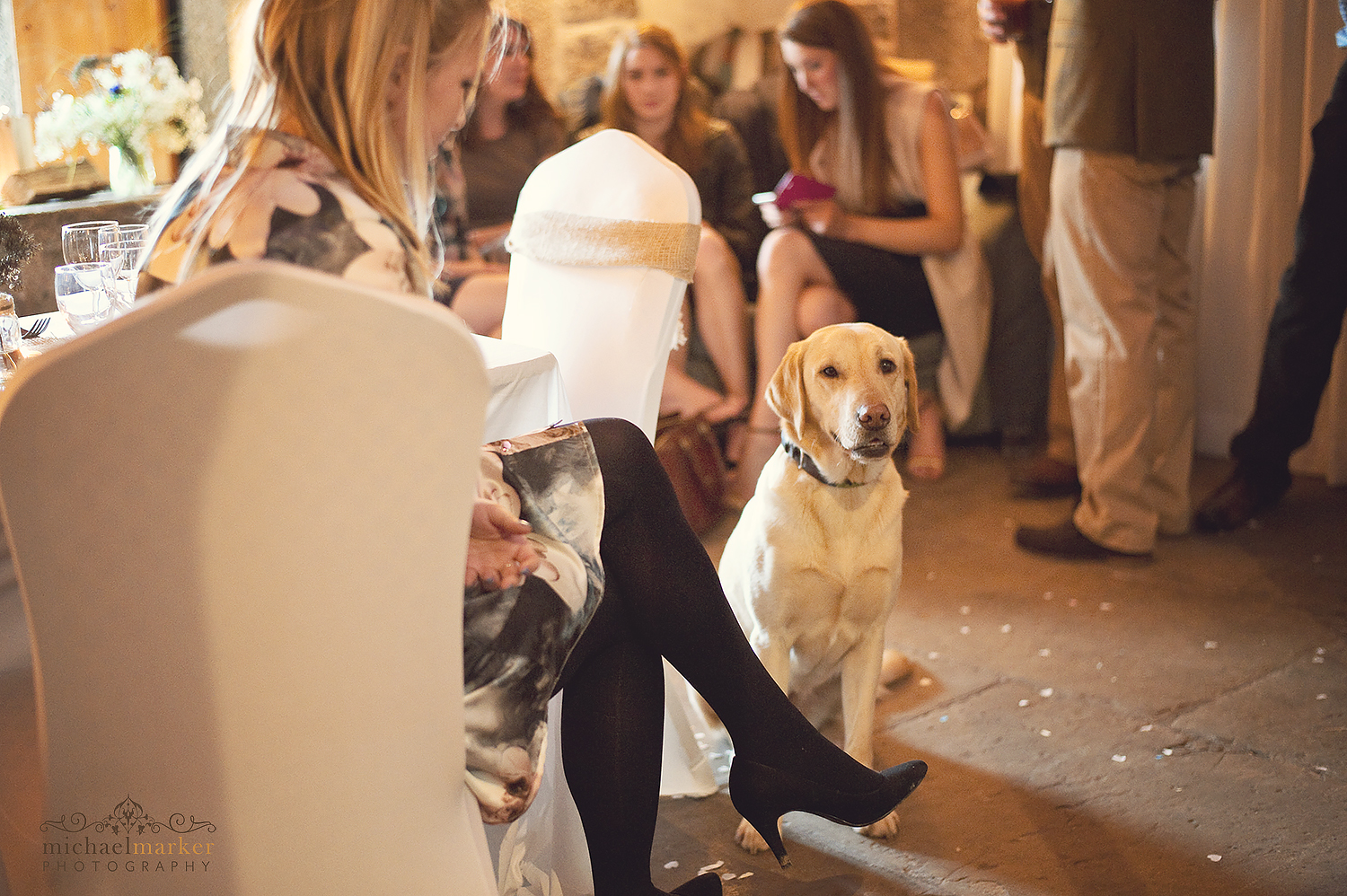 polhawn-dog-wedding-guest