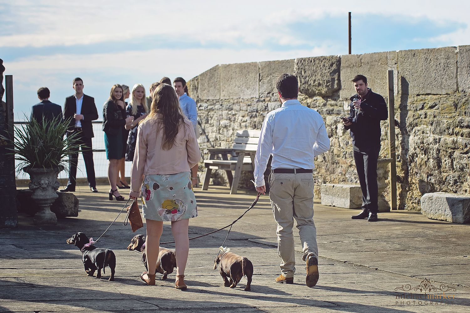cute dogs at Cornish wedding